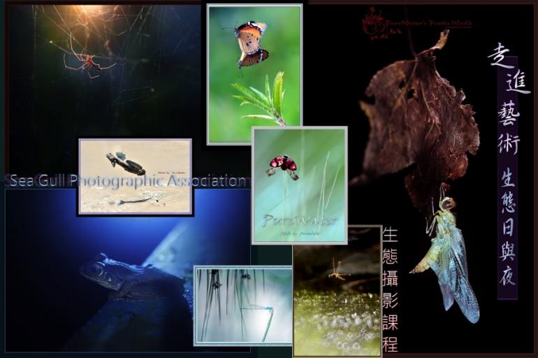 走進生態藝術日與夜–專題攝影課程 (額滿, 多謝支持)