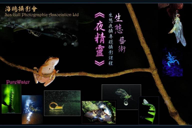 生態夜攝專題攝影課程(名額20人)