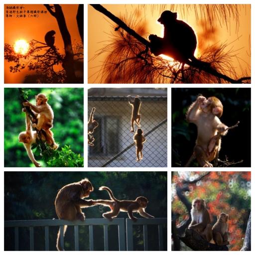 『香港野生猴子』專題攝影課程 (名額每班15人)